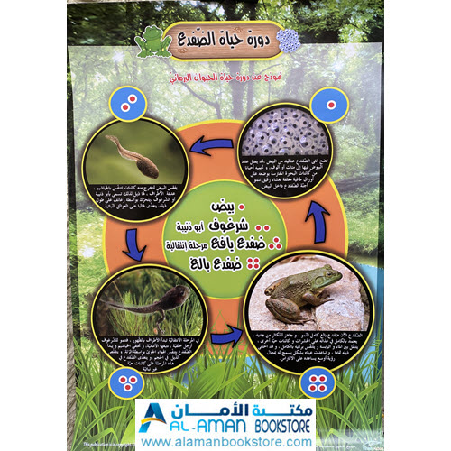 Al-Aman Bookstore - Arabic & Islamic Bookstore in USA - بوستر دورة حياة الضفدع - لوحة دورة حياة الضفدع