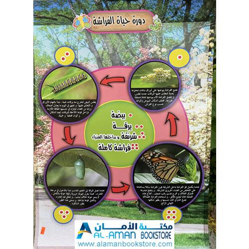 Al-Aman Bookstore - Arabic & Islamic Bookstore in USA - بوستر دورة حياة الفراشة - لوحة دورة حياة الفراشة