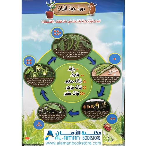 Al-Aman Bookstore - Arabic & Islamic Bookstore in USA - بوستر دورة حياة النبات - لوحة دورة حياة النبات